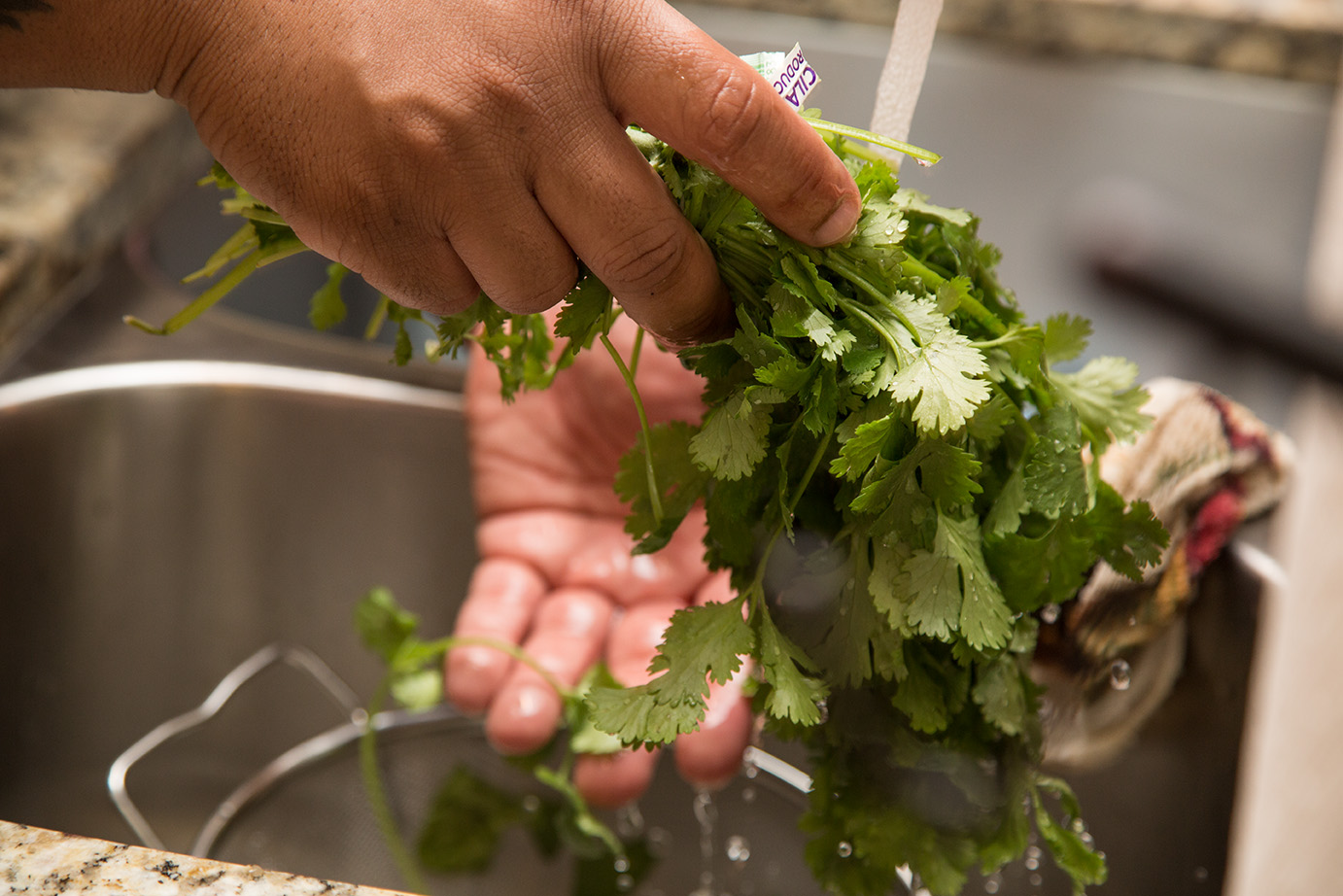 Washing the cilantro.